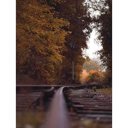 Fall | Осень