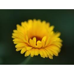 Flower | Цветок