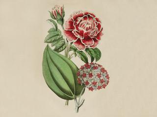 Категория постеров и плакатов The Floricultural Cabinet