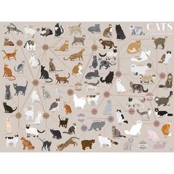 Cats | Кошки