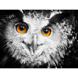 Eyes | Глаза | Сова