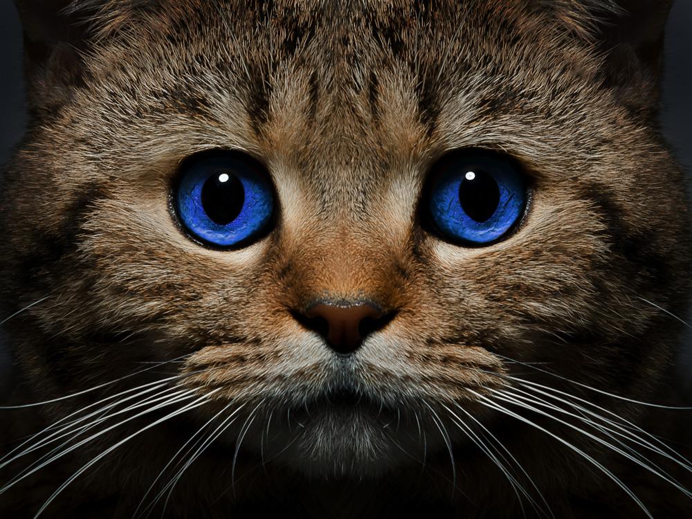 Eyes | Глаза | Кот