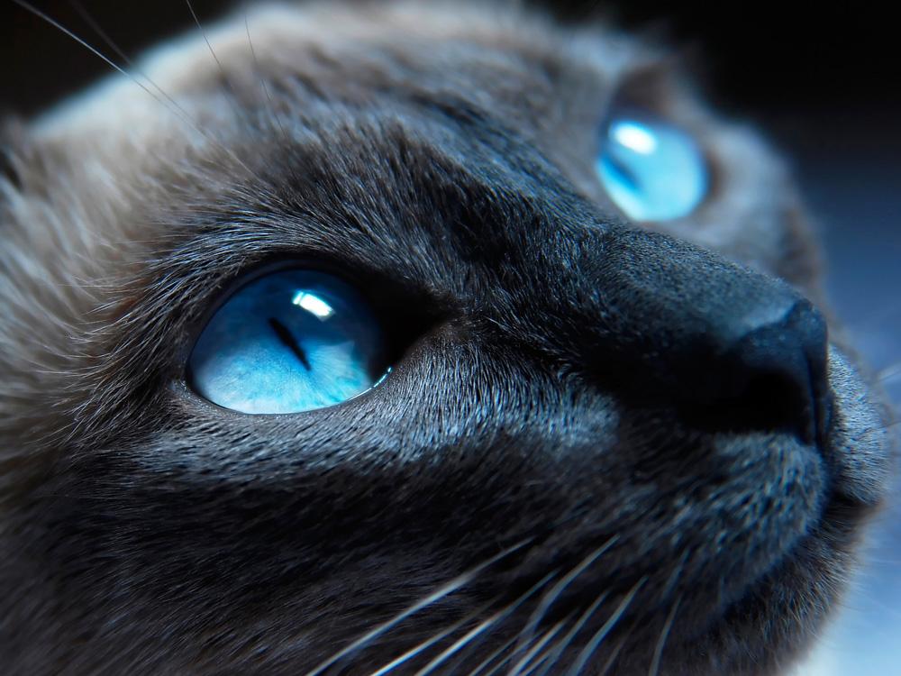 Eyes   Глаза   Кот