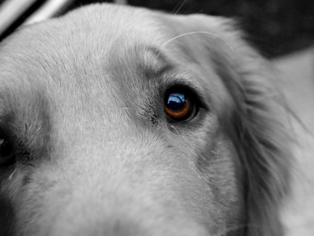 Eyes   Глаза   Собака