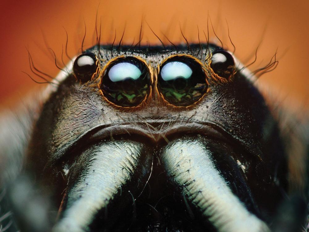 Eyes   Глаза