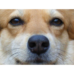Eyes | Глаза | Собака