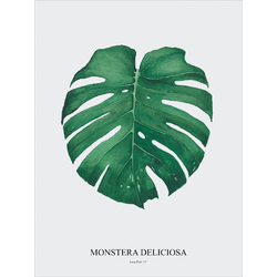 Monstera | Монстера