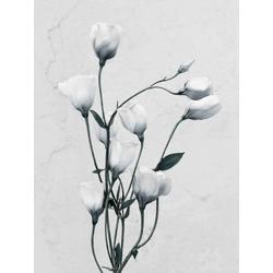 Botany | Ботаника