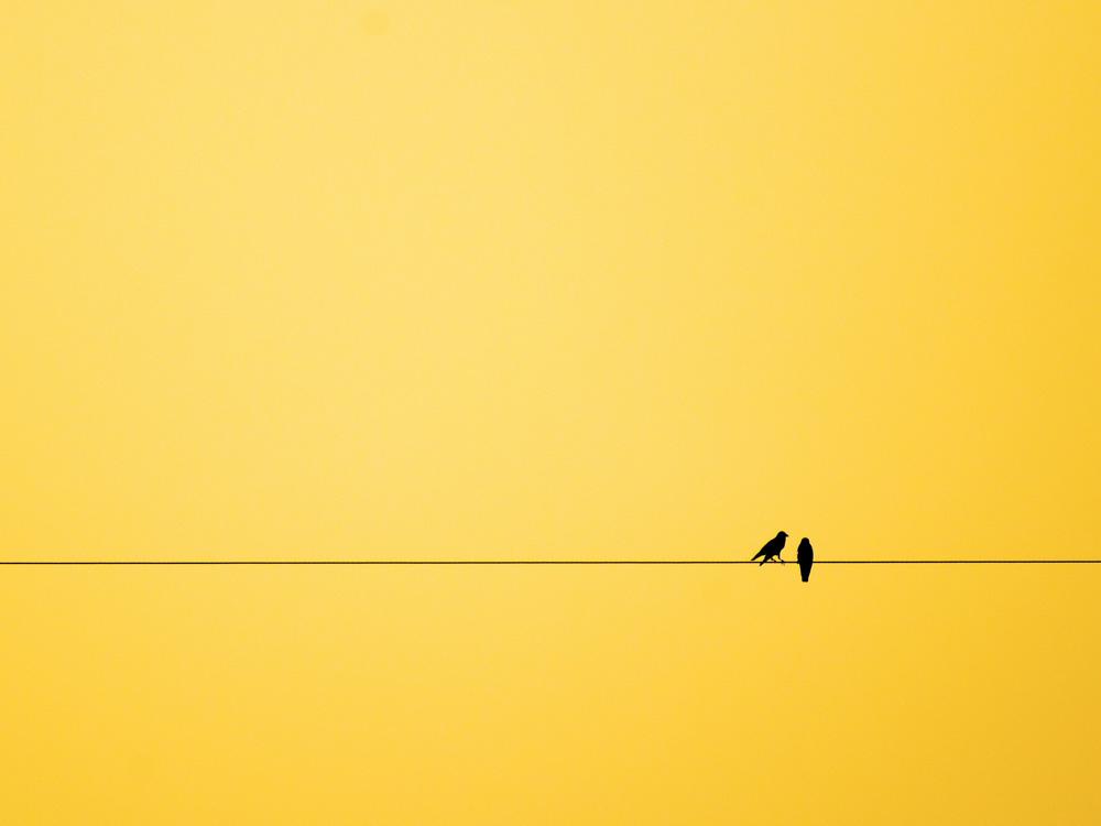Birds | Птицы