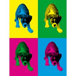 Colors | Собака