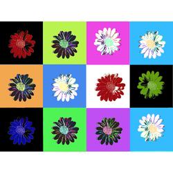 Colors | Цветок