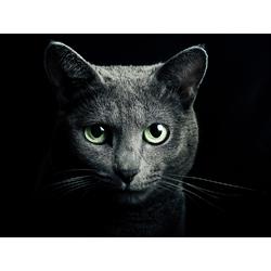 Cat Black | Черный кот