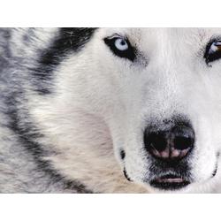 White Wolf | Белый Волк