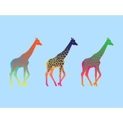 Giraffes | Жирафы