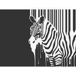 Zebra | Зебра