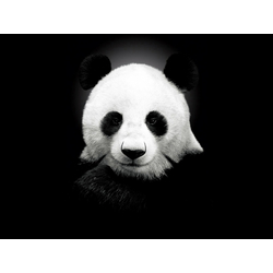 Panda | Панда