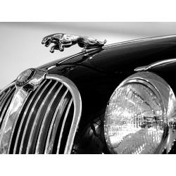 Jaguar | Ягуар