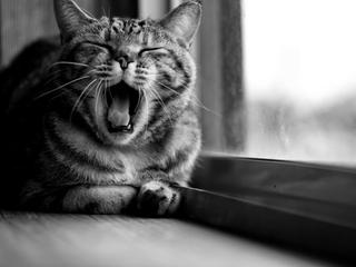Категория постеров и плакатов Коты