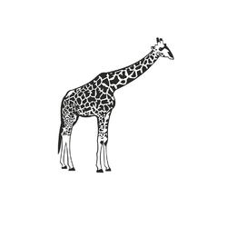 Minimal: giraffe | Жираф