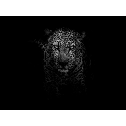 Leopard | Леопард