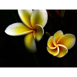 Flowers | Цветы