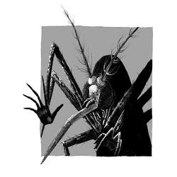 Insect | Насекомое
