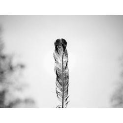 Feather | Перо