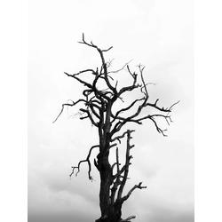 Tree | Дерево