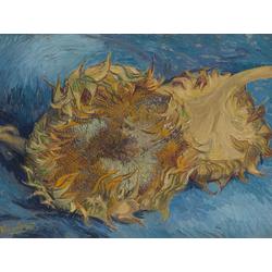 Van Gogh   Ван Гог - Два срезаных подсолнуха