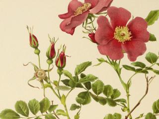 Категория постеров и плакатов Ботаника
