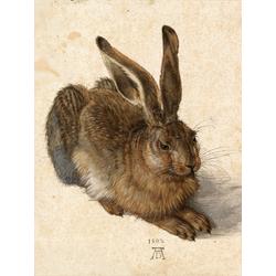 Albrecht Durer | Альбрехт Дюрер | Рисунок Заяц