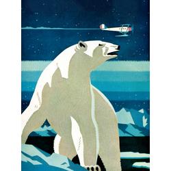 Polar Bear | Белый медведь
