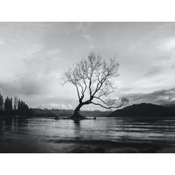 Tree (Коллекция постеров) | Дерево