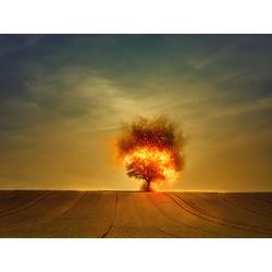 Fire Tree   Горящее Дерево