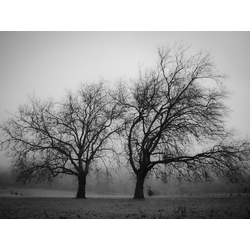 Tree   Дерево