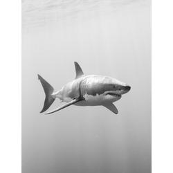 Shark | Акула