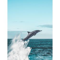 Dolphin | Дельфин
