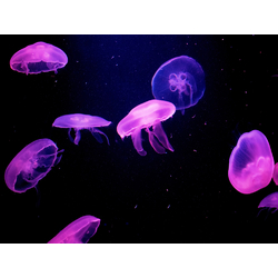 Jellyfish | Медуза