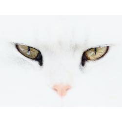 Cat | Кот