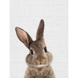 Rabbit (Коллекция постеров) | Кролик