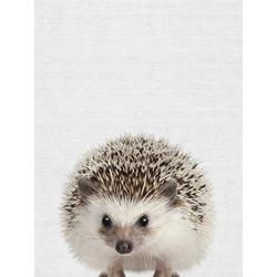 Hedgehog (Коллекция постеров) | Ёжик