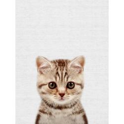 Cat (Коллекция постеров) | Кот