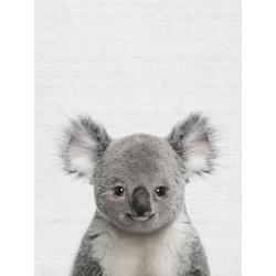 Koala (Коллекция постеров) | Коала