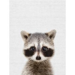 Raccoon (Коллекция постеров) | Енот