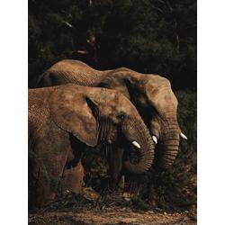 Elephant | Слон