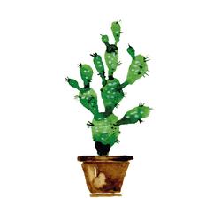 Cactus | Кактус