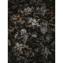 Foliage | Листья