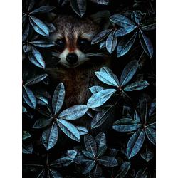 Raccoon | Енот