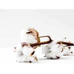 Cotton | Хлопок
