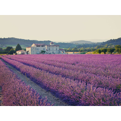 Provence   Прованс